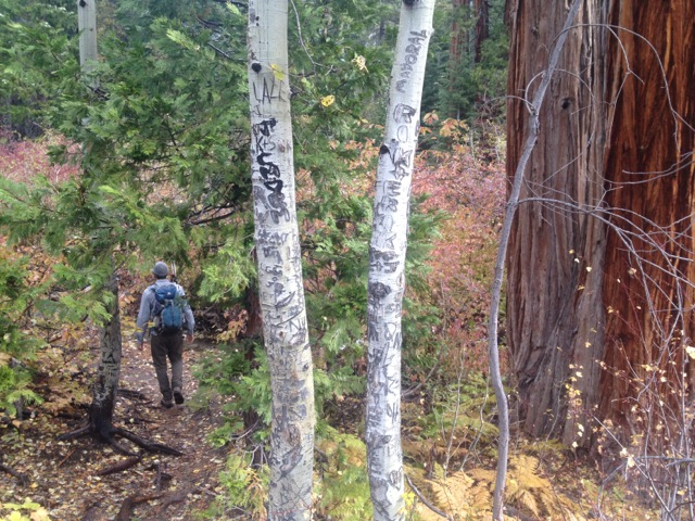 Sadly, the tree graffiti reminds us that we are not the first people to walk through here..