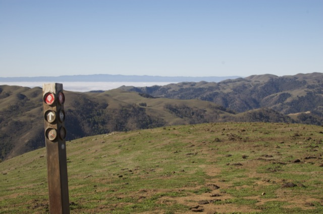 Cow patties, a sea of fog, and one of the many many trail signs.
