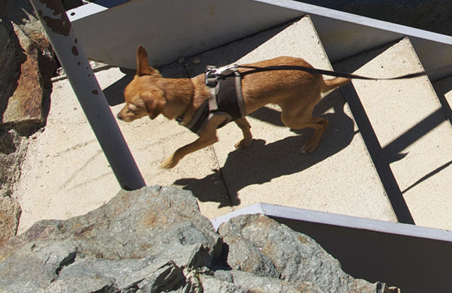 Little climber!