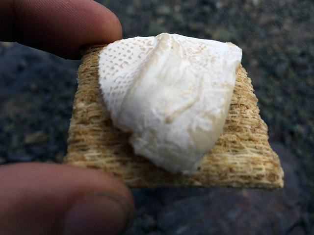 Brie on a cracker.  Yum.